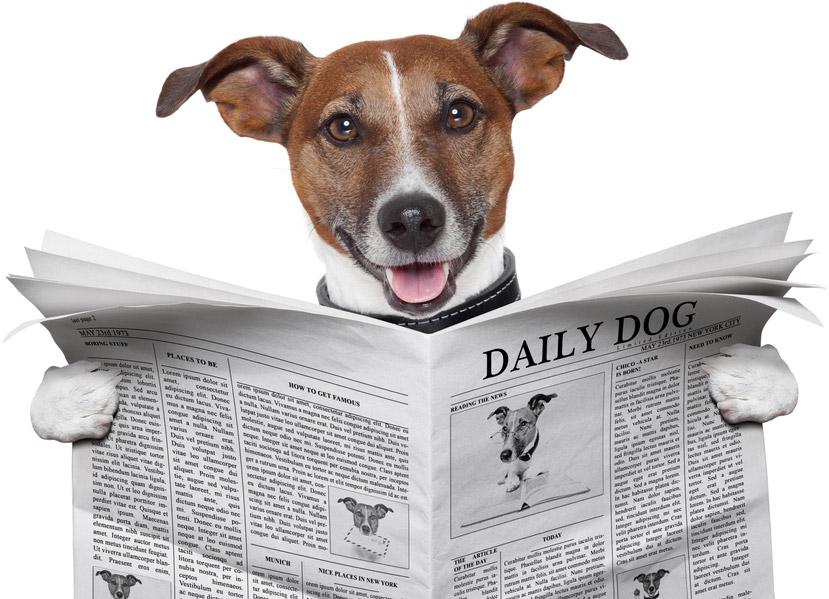 chien-journal