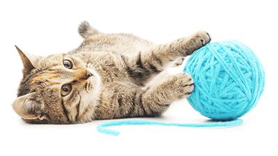 Pension féline - Au Paradis du Chat